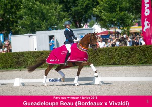Pavo-Winnaar-4-jarige-2015-Gueadeloupe-Beau-Kim-vd-Velden
