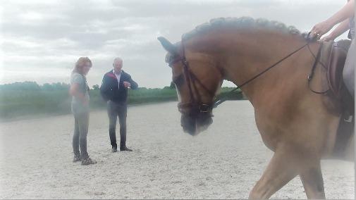 (Nederlands) Het trainen van een Haflinger, Sara Ouwehand de Hoefslag